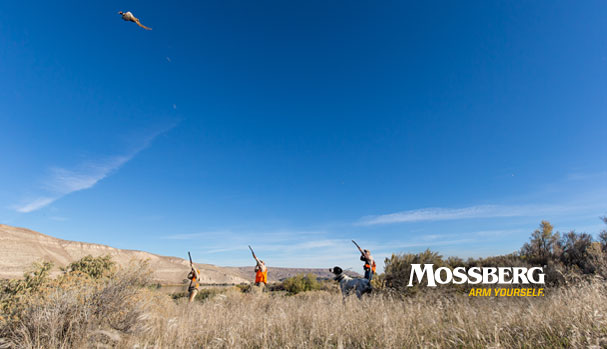 mossberg-wallpaper-target-CTA.jpg