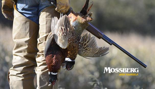 mossberg-wallpaper-the-hunt-CTA.jpg