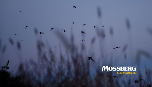 mossberg-wallpaper-waterfowl-CTA.jpg